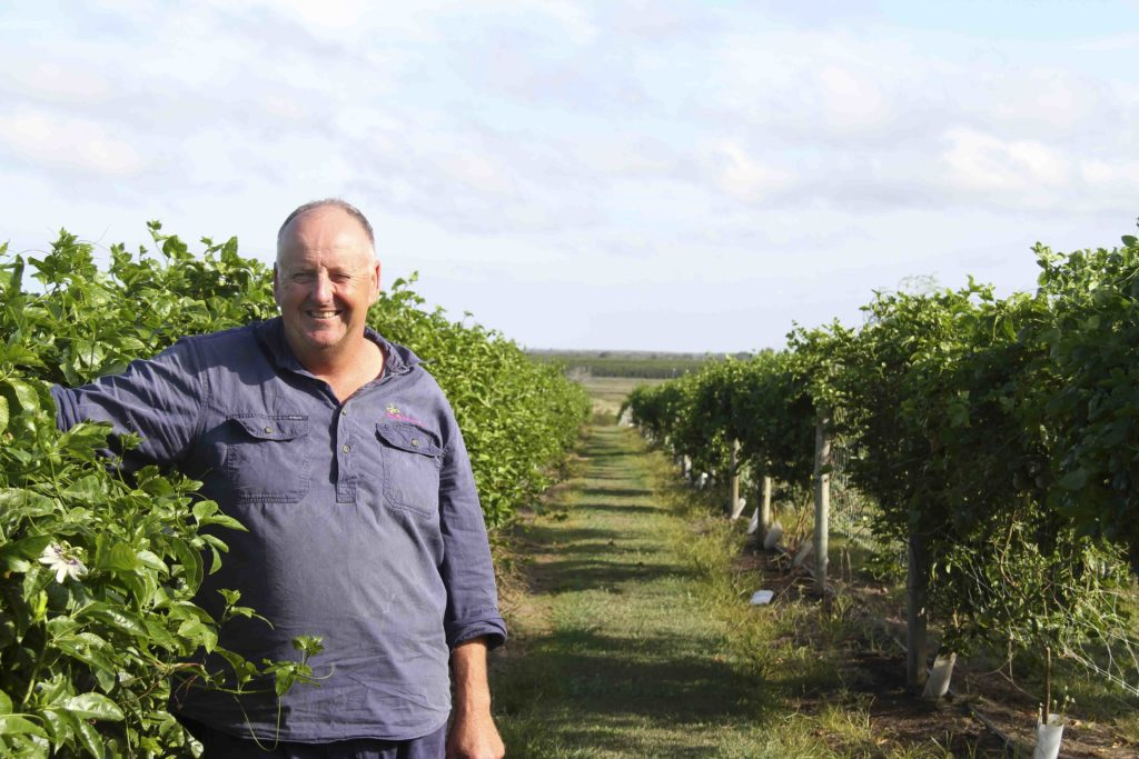 Tinaberries farmer Bruce McPherson with his trellised passionfruit vines.