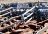 Biggenden meatworks and store sale