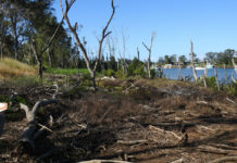 Damaged mangrove