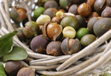 Macadamia crop drought