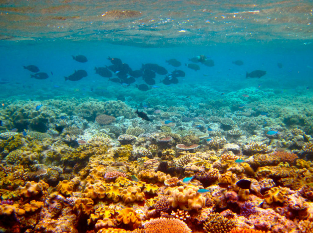 Canegrowers dispute science of Great Barrier Reef protection plans.
