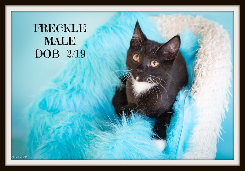 Can you help Freckle find his forever home?