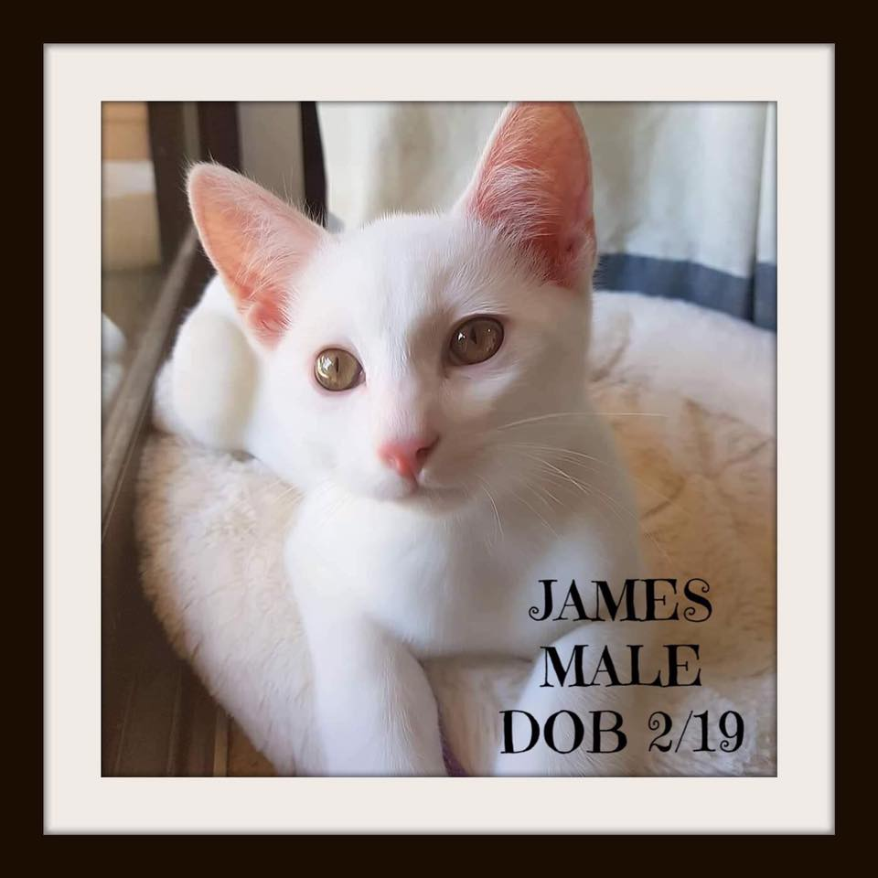 Do you have a home for James? Contact Cat Connections HQ