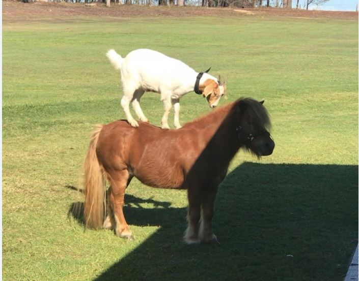 A goat and horse have formed an unlikely friendship at Bucca Retreat.