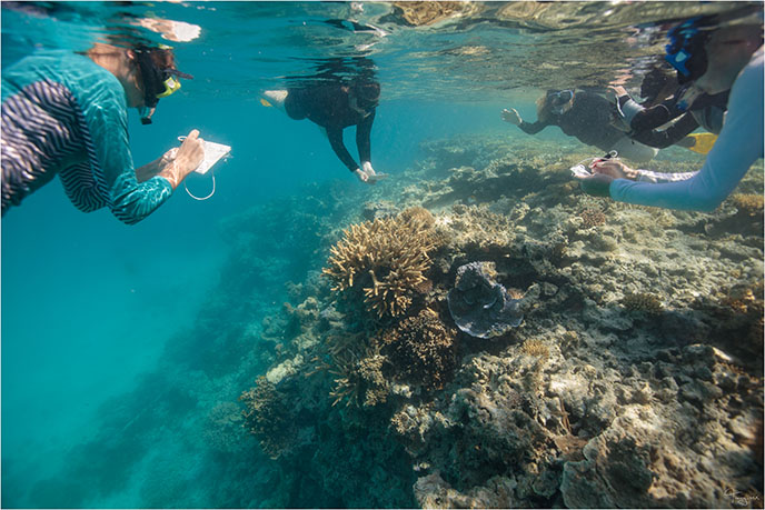 citizen scientist, Great Barrier Reef, Lady Musgrave Experience