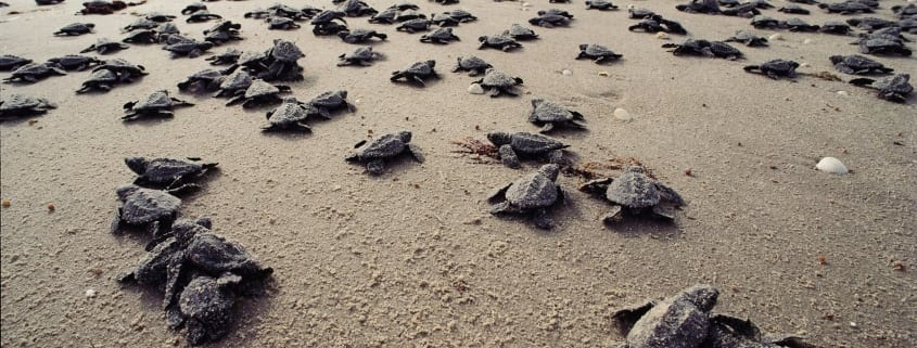 Bundaberg Regional Council supports the State Government's intention to protect turtles but wants a statewide approach.