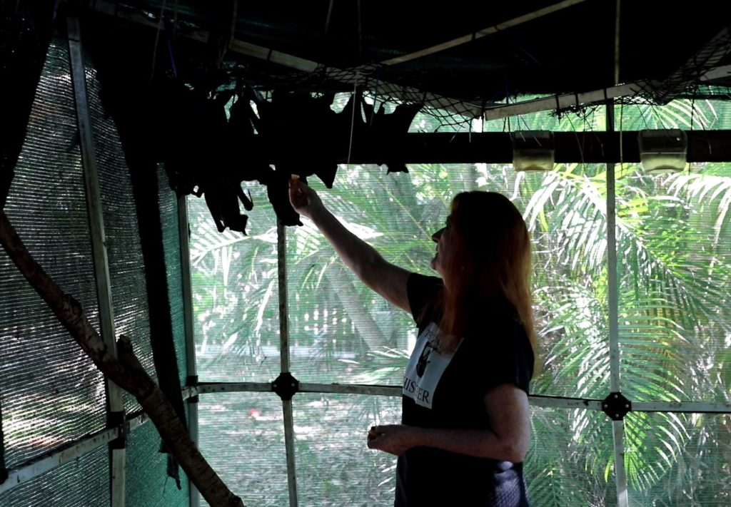 President of the Qld Wildlife Carers, batwoman Christine Wynne with some of the bats she is caring for.