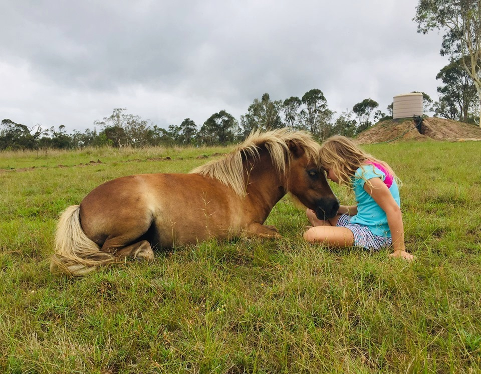 Miniature pony Honey makes a great companion and friend for children and people of all abilities.