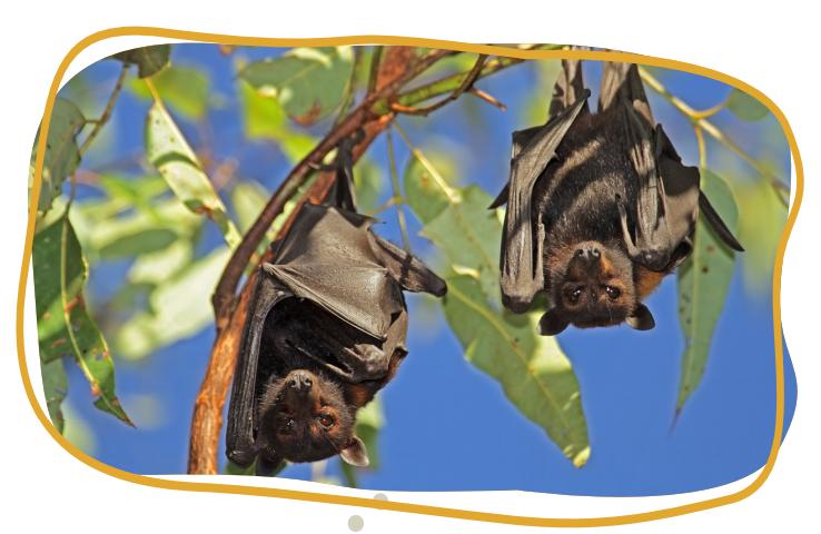 bat warning