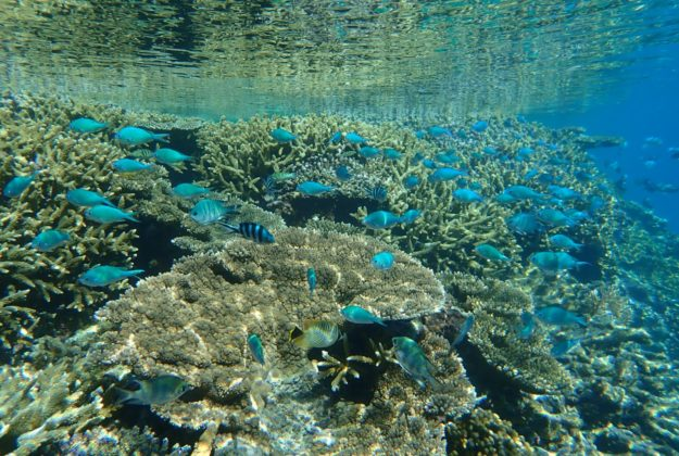 Lady Musgrave Island coral