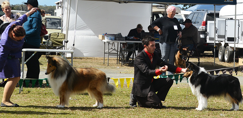 Pups put their best foot forward at a previous dog show event.
