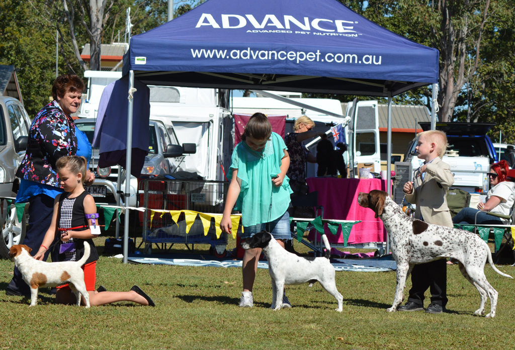 Dogs of all shapes and sizes will be strutting their stuff at this weekend's 2019 Purebred Allbreeds Dog Show.
