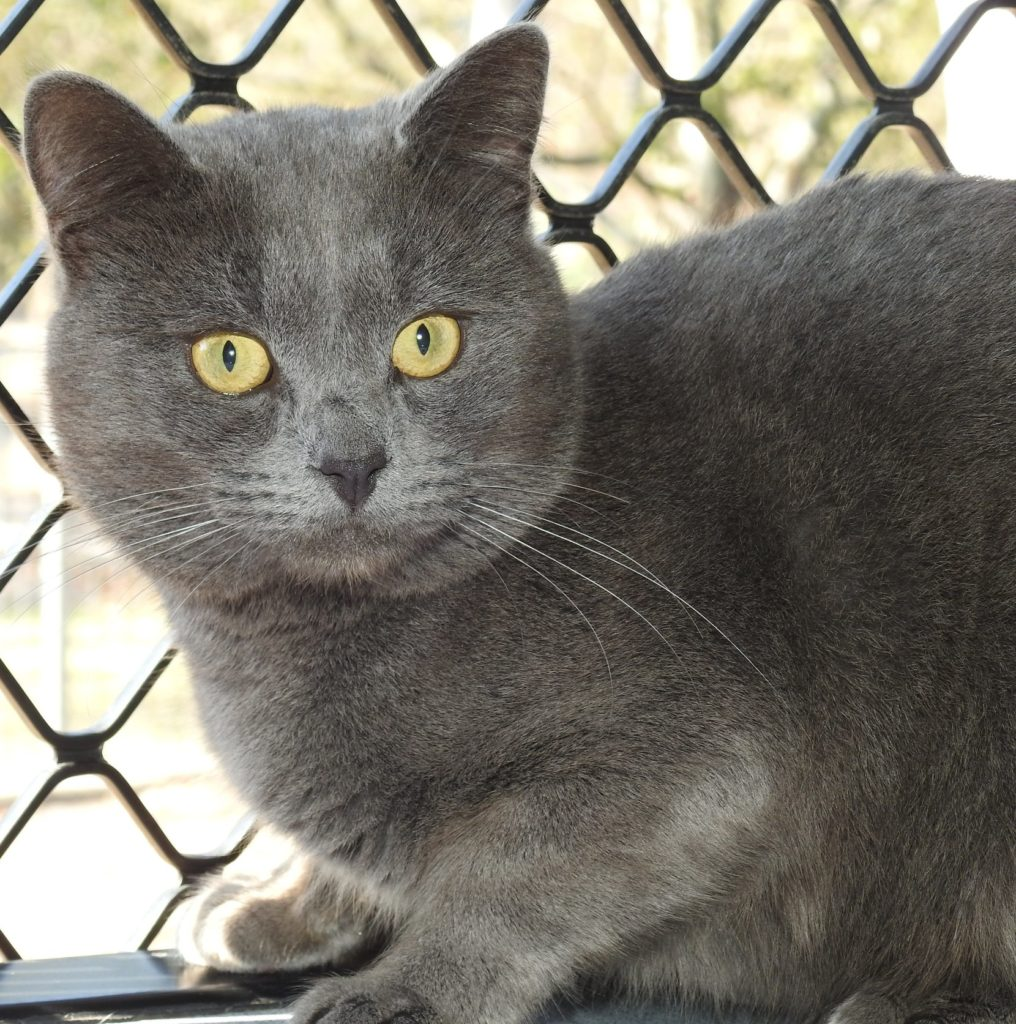 Shadow is available for adoption at the RSPCA in Bundaberg.
