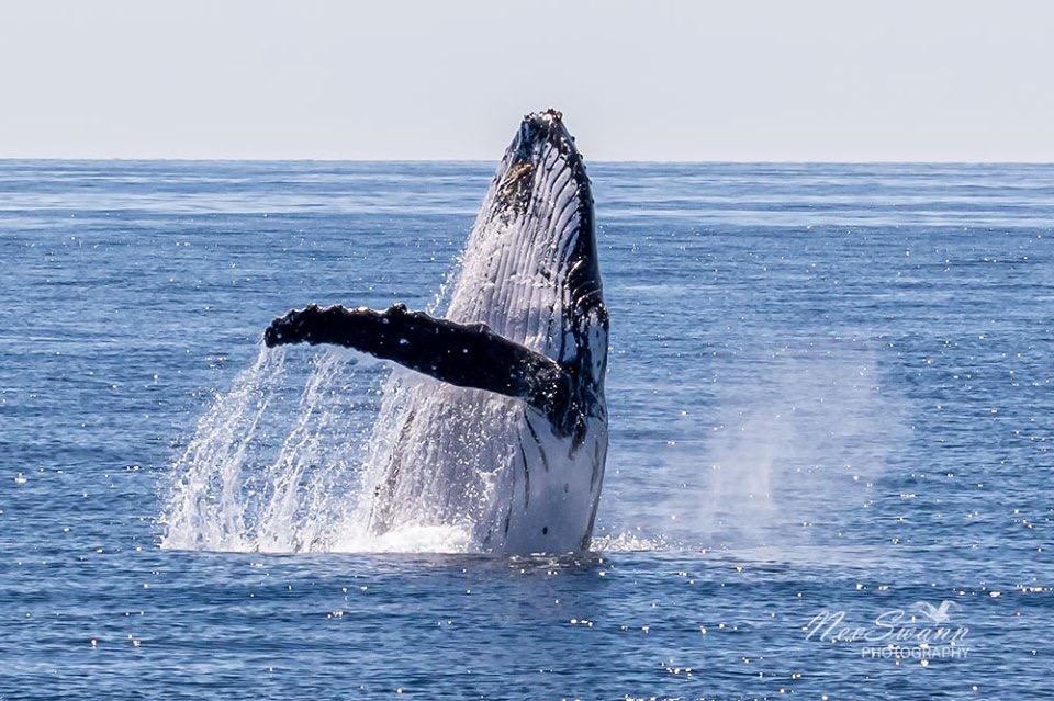 Australia Whale Experience