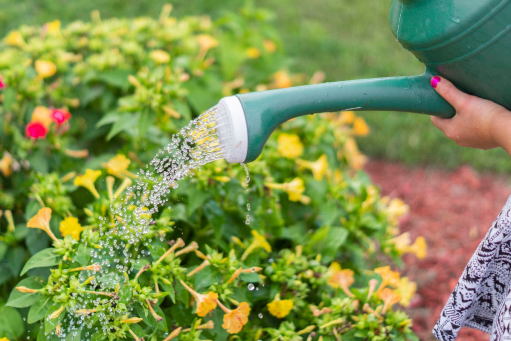 National Waster Week: How can you be water wise int he garden?