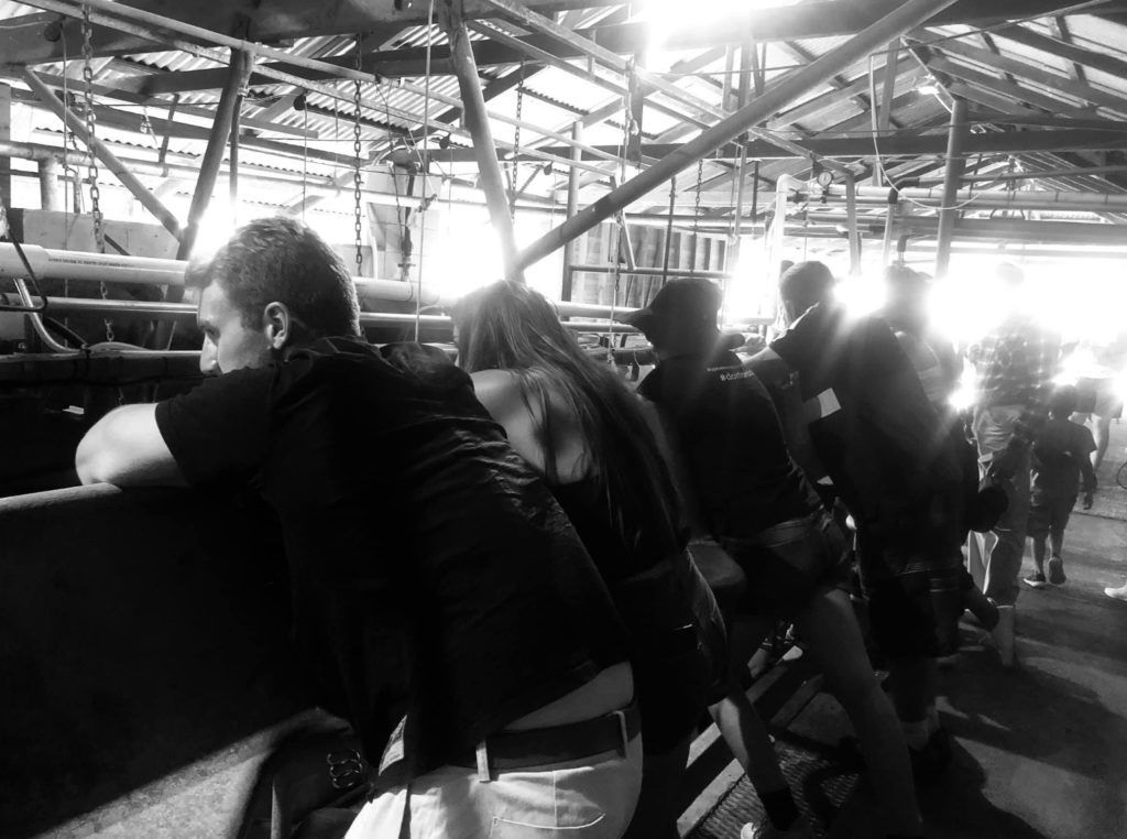 The last tour at CQ Dairy Fresh held in October