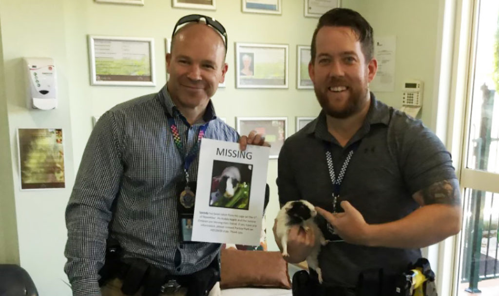 Local detectives from the Bundaberg Crime Unit returning Speedy the guinea pig.