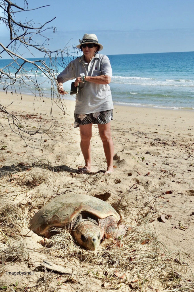 Turtle enthusiast Lesley Christensen maintains a data sheet on turtle sightings at Woodgate Beach. Image courtesy of Michelle Cocking.