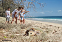 Woodgate Beach holidaymakers were entranced with the sight of a loggerhead turtle laying its eggs near the Esplanade in broad daylight. Image courtesy of Michelle Cocking