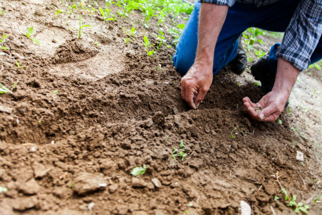 Council's Small Farms Field Day will give landholders advice on how to better protect themselves against pest plants and animals.