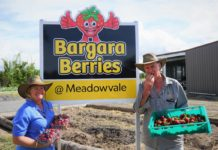 Bargara Berries Meadowvale