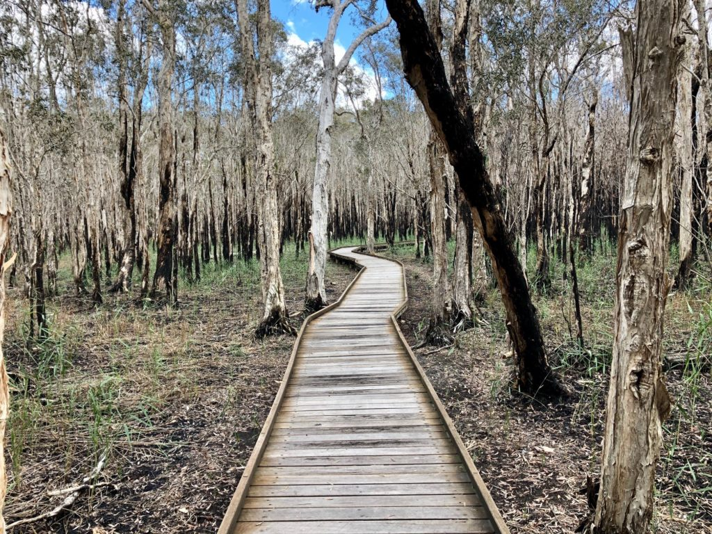 The Woodgate Boardwalk following bushfires and a prescribed burn is gradually reverting to its natural state.