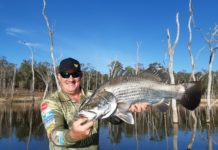 Dale Smith with a nice barramundi he caught at Lake Monduran this week