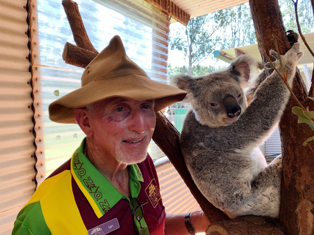 """Ian Jenkins, owner of Snakes Downunder Reptile Park and Zoo with """"Matilda"""" one of three female koalas at the zoo."""