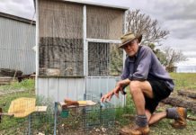 Experienced Indian Myna trapper Eric Lester with his traps. He has a couple of domestic birds he uses as 'caller birds' to lure the pest birds to the traps.