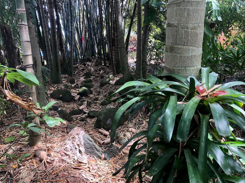 The rainforest section of the garden is highlighted by mature palms and bamboo.