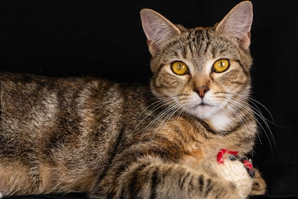 Stellar Stella is available for adoptions at Bundaberg RSPCA